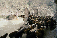 Shepherd and sheep on a destroy bridge the road to the Menar e Jam in the Ghor province - Afghanistan..From western Afghan capital Herat to the former capital of the Ghorides Empire Fîrûzkôh, next to the Mena e Jam..-The full text reportage is available on request in Word format