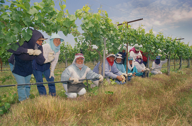 Vineyard workers near Prosser, Washington smile at camera during harvest