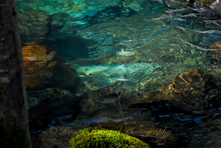 &quot;THIS WAY DARKLY&quot;<br /> <br /> Green and brown brooding waters of Patrick Creek in California. Foreboding yet beautiful. ORIGINAL 24 X 36 GALLERY WRAPPED CANVAS SIGNED BY THE ARTIST $2,500. CONTACT FOR AVAILABILITY.