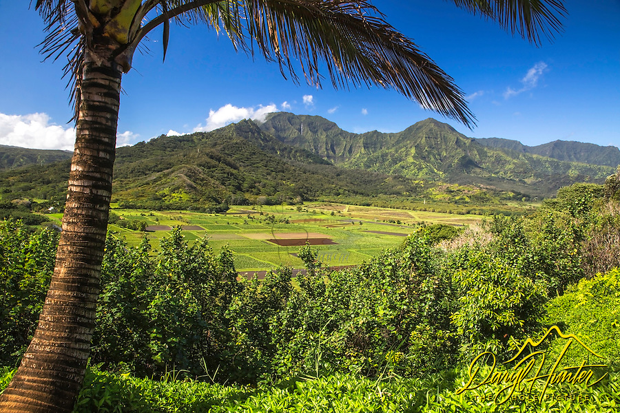 Hanalei Valley in Princeville on the Hawaiian Island of Kauai.  The Hanalei Valley is an enchanted site charmed with the likes of countless waterfalls, rainbows, fields of taro and hidden treasures waiting to be explored. Set against the backdrop of the carved out and waterfall bejeweled Namolokama Mountain.