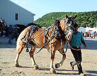 Draft horse and driver on way out of the arena at Cheshire Fair in Swanzey, New Hampshire USA