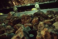SUDAFRICA - Kimberley, miniera di diamanti di Bultfontein ( Miniere De Beers): il materiale estratto grezzo.