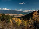 Golden tamarack trees from Smith Rd. overlooking the Kootenai Valley and Kootenai river in north Idaho