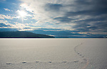 Idaho, Priest Lake, Coyote tracks on snow covered ice  in the morning sun over Priest Lake.