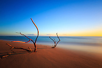 A partially submerged driftwood tree pokes out of the sand in an image of the surreal, South Aliomanu Beach, Kaua'i.