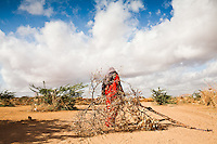 A Somali refugee woman dragging the parched branches of a tree to use in constructing a shelter in the outskirts of Ifo camp in Dadaab, Kenya. The UNHCR camp is the largest refugee camp in the world. Tens of thousands have arrived in a steady exodus from Somalia's drought and civil war.