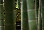Photo shows a Buddha statue lying among the bamboo in the grounds of Hokokuji temple in Kamakura, Japan on 24 Jan. 2012. Photographer: Robert Gilhooly