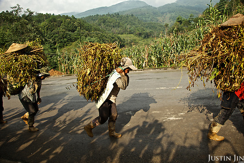Farmers carry vegetation to the market in Yunnan province.