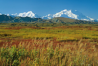 20, 3020+ ft. Mt. McKinley (locally called Denali), autumn tundra, Denali National Park, Alaska