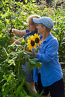 Two women picking flowers for Yarmouth Community Garden and Meals on Wheels customers, Yarmouth Maine