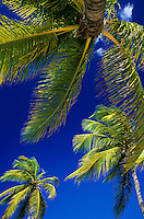 Palm trees and blue sky<br /> Virgin Islands