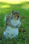 Squirrel, US Capitol, Washington DC