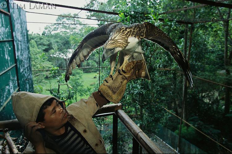 Philippine Eagle Endangered