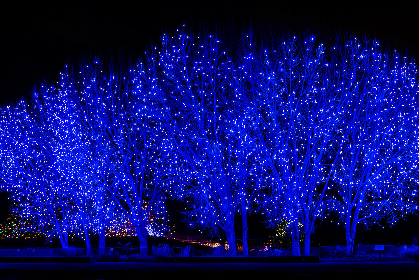 Blossoms Of Light One Million Lights Illuminating The Denver Botanic Gardens During The