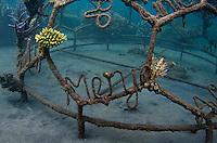 Coral Project Pemuteran Bay Bali Indonesia