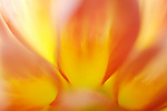close-up of a dahlia flower -commercial/editorial licensing for this image is available through: http://www.gettyimages.com/detail/200472924-001/Photographers-Choice