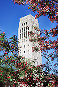 Burton Memorial Tower in spring. Red flowering cherry tree..Burton Tower.Red bud / cherry blossoms