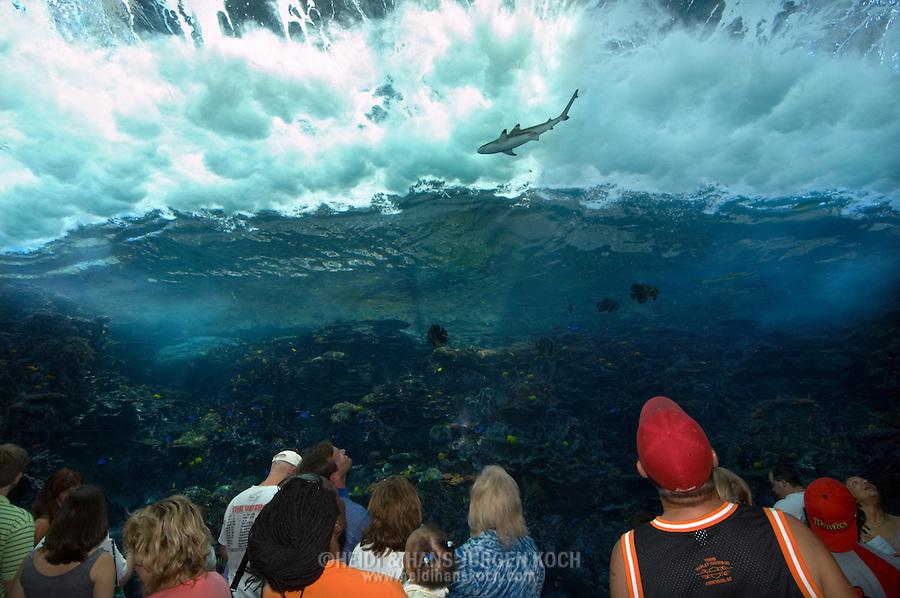 Usa Vereinigte Staaten Von Amerika Georgia Aquarium Zur