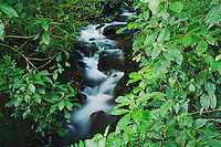 Mountain stream in Cloudforest in Highlands, Bosque de Paz, Central Valley, Costa Rica, Central America