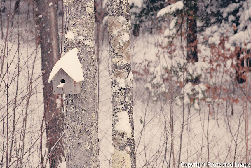 Birdhouse after a winter storm.
