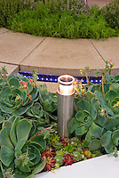 Succulents surrounding garden lighting next to patio