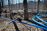 Rob Hastings checks his greenhouse before going into the woods to drill new holes in his sugar maples so he'll get a bit more sap from them before the season ends.  Although the trees are still running, warm temperatures will end the sugar maple season.  He has made 327 gallons of syrup but his shooting for 400..Rivermede Farm has been in his family for generations.