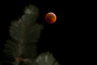 """Total Lunar Eclipse on Winter Solstice 2"" This very special total lunar eclipse was photographed on 12-20-2010 in the Tahoe Donner area of Truckee, CA."
