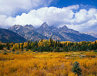 Grand Teton National Park, WY <br /> A sea of willows at Blacktail Ponds with afternoon clouds gathering over the Teton Range in autumn