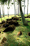 Hawaii: Oahu, birthing heiau Kukaniloko. Photo:hiinsi107.Photo copyright Lee Foster, 510/549-2202, lee@fostertravel.com, www.fostertravel.com