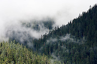Clouds interspersed with old growth forested ridges, Mount Rainier National Park, Washington, USA