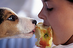 Young girl with her puppy ( Jack Russell Terrier) intensely looking at each other and eating an apple together