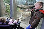 Foto: VidiPhoto<br /> <br /> RHENEN - Ondanks het vrij natte weer doen dierenparken tijdens de eerste week van de herfstvakantie goede zaken. Het is &quot;lekker druk&quot;, volgens woordvoerders. Voor Burgers' Zoo en Arnhem en Ouwehands Dierenpark in Rhenen geldt dat bezoekers profiteren van veel overdekte atracties. Burgers' heeft de Bush, Desert en de Ocean. Ouwehands het Orihuis, het overdekte Gorillaverblijf en de zeehondenshow. Beide parken hebben bovendien een overdekte speeltuin. Foto: Oog in oog met de witte leeuwen van Ouwehands Dierenpark.