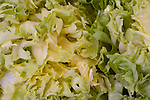 Closeup of lettuce leaves
