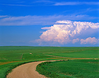 Road across the prairie with distant thunderstorm cloud at Buffalo Gap National Grassland, South Dakota, AGPix_0019