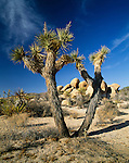 Desert landscape with boulders, Joshua Tree National Park, California