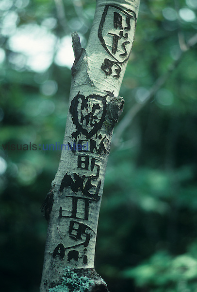 Carvings on a tree trunk, one form of graffiti.