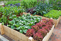 Raised Bed Vegetable Garden in Backyard, square foot type gardening
