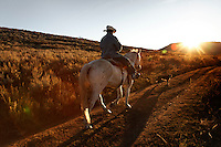 Peruvian sheperd  rides into the sunet on trained mustang Dot while trailing sheep in Upper Gully with the help of border collies in southern Wyoming. Edgar Oscanoa lives at a camp and works alone.<br /> <br /> Sharon O'Toole drove her granddaughter Siobhan Lolly and father George Salisbury around the Ladder Livestock Ranch in southern Wyoming (west of Bags at the Colorado border.) Peruvian shepherds traditionally work at the ranch watching over sheep.  Dot, an adopted mustang that came from the correctional center in Riverside, saved a shepherd's life by finding his way home on a cold night when they were lost.  Nelson, the saved worker, left years ago but the horse is still a favorite among ranch hands like Edgar. He is steady--rock solid--as they guard the sheep.