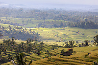 Jatiluwih, Bali, Indonesia.  Terraced Rice Fields, Early Morning.