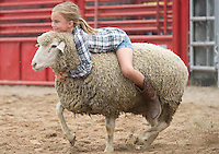 Attending her first rodeo, Camilla Johnson, 7, of River Falls takes a ride on a sheep Saturday, September 14, 2013, during the mutton busting portion of the Falcon Frontier Days Rodeo. Johnson's was the last ride out of all the children participating, and the longest to stay on.