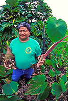 Kalo/Taro farmer holding plants, Pahoa,  Big Island