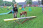Boxer Going On Bridge Test