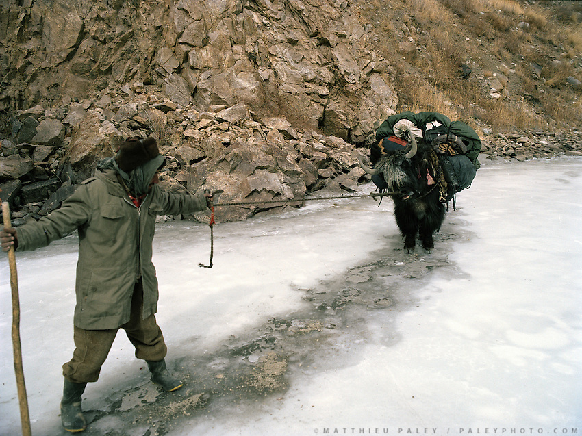 Yaks refuses to go on the ice..Trekking with yak herder Mohammad and Malang down the frozen Wakhan River, the only way up and down to the Little Pamir..Winter expedition through the Wakhan Corridor and into the Afghan Pamir mountains, to document the life of the Afghan Kyrgyz tribe. January/February 2008. Afghanistan