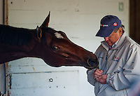 Havre de Grace tries to coax a peppermint out of her owner Rick Porter at Churchill Downs on November 1, 2011, where the filly is preparing to take on the boys in the Breeders' Cup Classic.