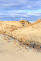 Afternoon on the dunes at Hatteras Island.
