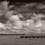 HARVEST #blackandwhite #B&W #black&white #monochrome #wisconsin #midwestmemoir #photograph #landscape #clouds #hay #haybails  #harvest #photography #field #farm #farmfield