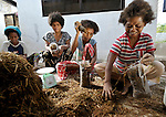 Pilar Santos (left), Susan Santos, Janet Tamtan, and Lita Santos pack compost on which mushrooms will grow, part of a livelihood project sponsored by the United Methodist Church in Camachile, Luzon. The church maintains a pastoral presence here among indigenous Aetnas who were displaced by the eruption of Mt Pinatubo, and has used mushroom production and other livelihood projects to provide income to poor families.  Government-sponsored repression in the area has struck many of these families, and the church is a presence of hope and peace amidst the conflict.