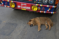 Dog sleeping next to a car,Paro Bhutan