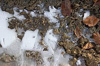 Frozen puddle on a country lane, Oxfordshire, United Kingdom