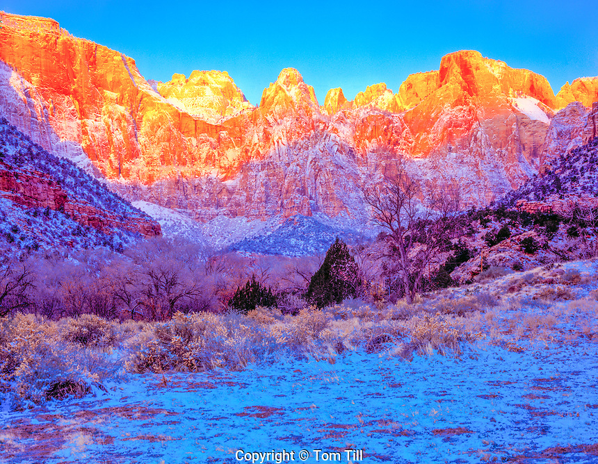 Towers of the Virgin at winter dawn  Zion National Park, Utah  Altar of Sacrafice and other pinnacles